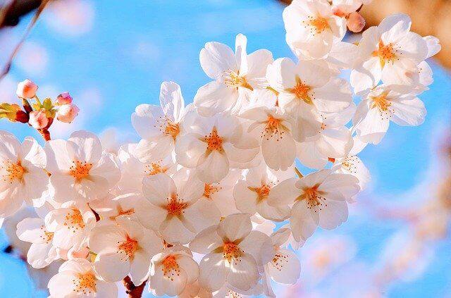 ポカポカ陽気の春のお花見で飲みたいおすすめワイン【雨の日は自宅で】